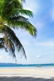 Tropical seascape with sky and palm tree Stock Images