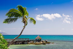 Tropical seascape view. Tropical seascape panorama with coconut palm tree and long wooden decking Stock Photography