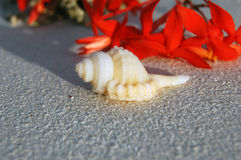 Tropical Seashell on the Beach Royalty Free Stock Photo