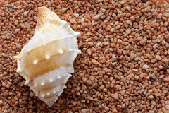 Tropical seashell on sand Stock Images