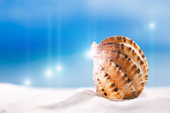 Tropical seashell sea shell with ocean , beach and seascape Stock Photos
