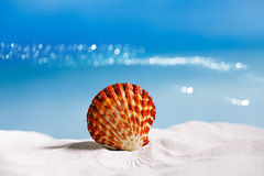 Tropical seashell sea shell with ocean , beach and seascape Royalty Free Stock Photos