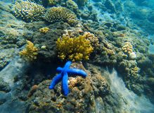 Tropical seashore underwater landscape. Coral reef and blue starfish. Stock Images