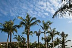 Tropical seaside Royalty Free Stock Photo