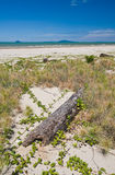 A tropical seaside with sandy beach, logs, vines, Royalty Free Stock Photography