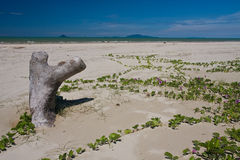 A tropical seaside with sandy beach, vines, tree t Stock Image