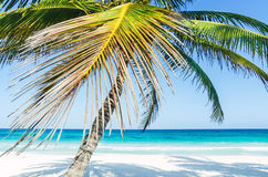 Tropical seaside view and palm trees over turquoise sea at exotic sandy beach in Caribbean sea Stock Image