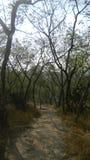 Tropical season inside the forest stock photos