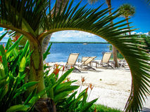 Tropical seating on a beach framed by a detailed green palm/tropical tree. Stock Image