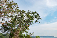 Tropical seaview from the cliff, cloudy and blue sky background Stock Image