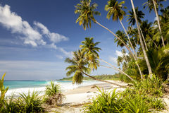 Tropical secluded dream beach with palmtrees. And White sand Royalty Free Stock Photos