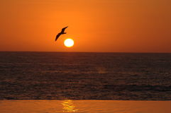 Tropical Serenity. A lone seagull soars past the setting sun in a tranquil caribbean resort location stock images