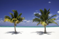 Tropical Serenity - Twin Palm Trees. A view of two palm trees with a tiny ship in the distance framed in the middle on the beach on Isla Pasion, a popular Stock Image