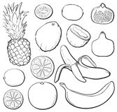 Tropical set black & white Royalty Free Stock Photography