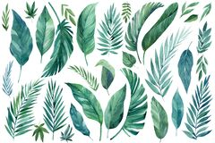 Tropical set of plants on a white background. Watercolor hand-painted, summer clipart