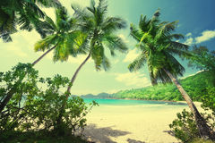 Tropical Seychelles beach Stock Images