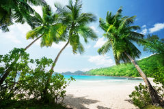 Tropical Seychelles beach. On a sunny day Royalty Free Stock Photography