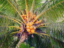 Tropical Seychelles. Palm trees on the La Digue Mahe Stock Photography