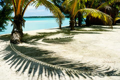 Tropical  shadow. Stock Image