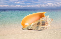 Tropical shell on a beach royalty free stock photography