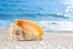 Tropical shell on a beach stock image