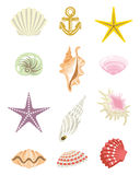 Tropical Shell set Royalty Free Stock Photography