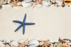 Tropical shells ans starfish on a beach Stock Photo