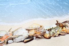 Tropical shells on a beach. Exotic tropical shells on a white sand beach Royalty Free Stock Images