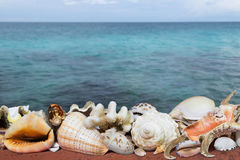 Tropical shells and blue sea Stock Image