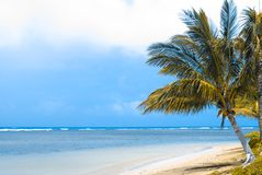 Tropical Shore Stock Images