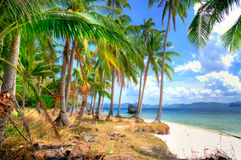 Tropical shore Royalty Free Stock Photo