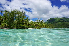 Tropical shore green vegetation French Polynesia Stock Photography