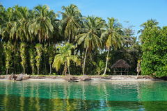 Tropical shore with lush coconut trees and a hut Royalty Free Stock Photo