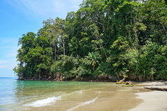 Tropical shore with lush vegetation in Costa Rica. Tropical shore with lush vegetation on Punta Uva beach, Caribbean, Puerto Viejo, Costa Rica Royalty Free Stock Photo