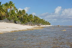Tropical shore with rocks and coconut trees Royalty Free Stock Photos