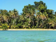 Tropical shoreline Royalty Free Stock Photos