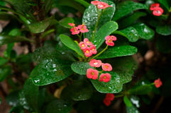Tropical shrubbery in the rain Stock Images