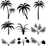 Tropical silhouette. Tropical trees and bushes silhouette Stock Image
