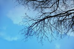 Tropical silhouette tree under the blue sky. Tropical silhouette high contrast tree under the blue sky Stock Photography