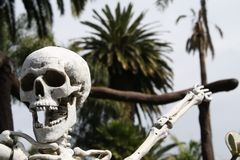 Tropical skeleton Royalty Free Stock Images