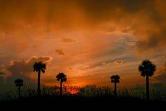 Tropical Sky. Vivid Sunset sky above palms and seaoats. Madeira Beach Florida Stock Photos