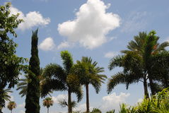 Tropical sky. A beautiful day in a tropical paradise Royalty Free Stock Photos