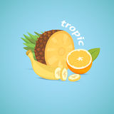 Tropical sliced fruits isolated vector illustration Royalty Free Stock Photos