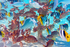 Tropical small fishes Stock Image