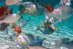 Tropical small fishes Royalty Free Stock Photos