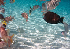 Tropical small fishes. Royalty Free Stock Photography