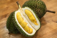 Tropical southeast asian pungent fruit durian pried open and ready to eat.  stock photos