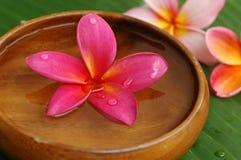 Tropical spa royalty-vrije stock foto