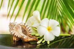 Tropical spa concept stock foto