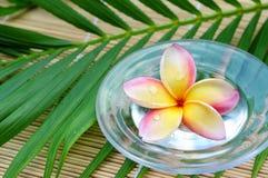 Tropical spa concept Stock Photo